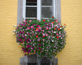 J.O.S. Hanging Baskets